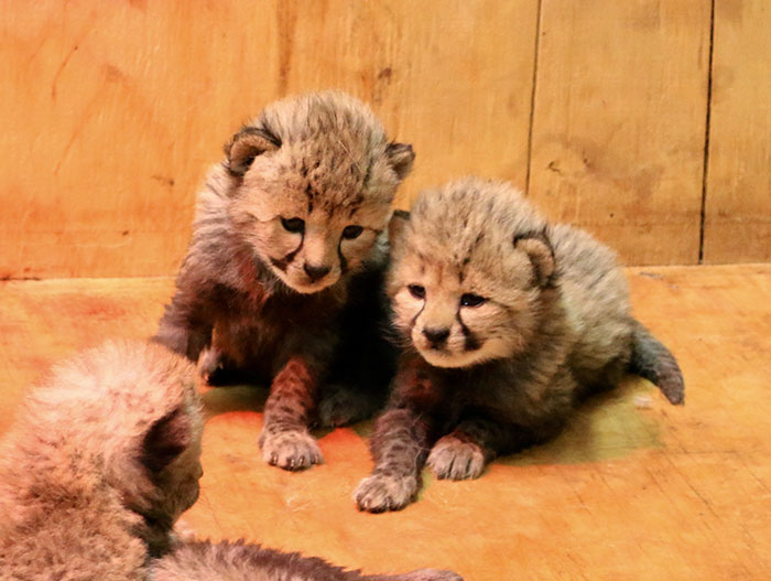 Малыши в зоопарке Сент Луис.