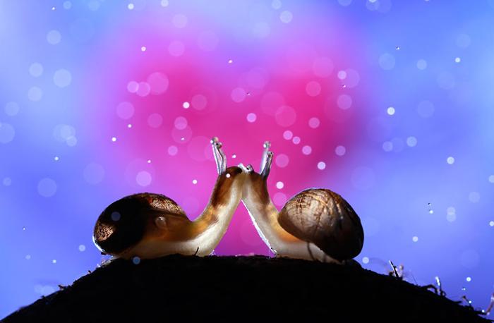 Улитки кажутся фотографу самыми романтичными существами на земле.
