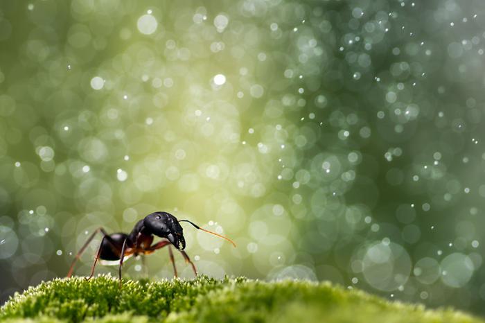 Путешествия муравья.
