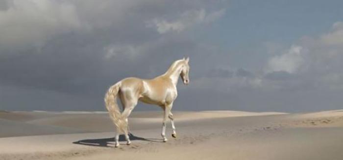 Невероятно красивые лошади.