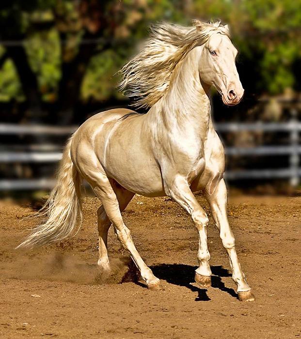 Верховая порода лошадей, выведенная на территории современной Туркмении.