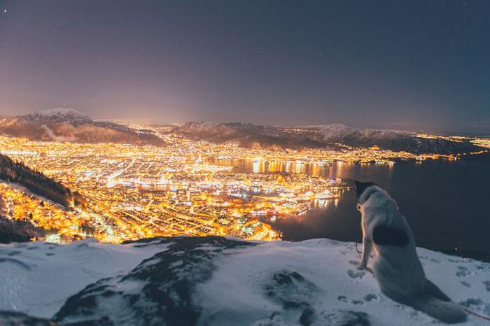 С видом на ночной город.