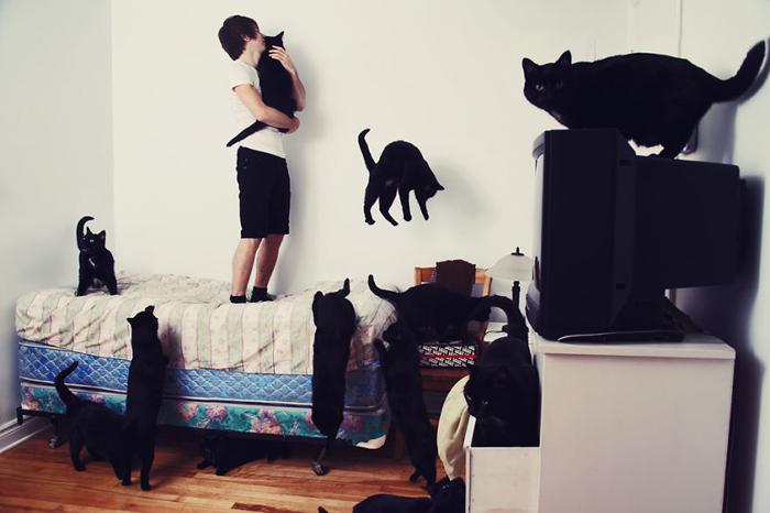 Алекс Дали и полчище черных котов.