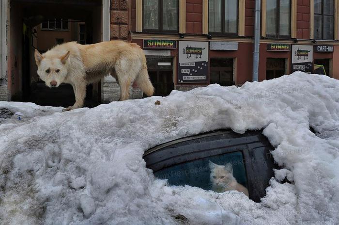 Сказки дедушки МукУ.  Фото: Александр Петросян.