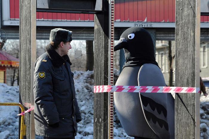 Голубь.  Фото: Александр Петросян.