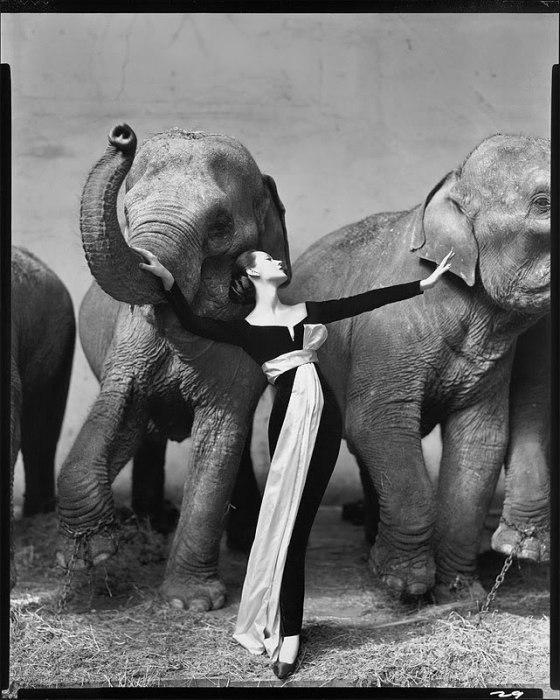 Dovima with Elephants. Август 1955.
