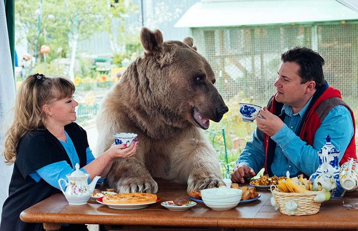 Медведь Степан живет с семьей Пантелеенко больше 20 лет.