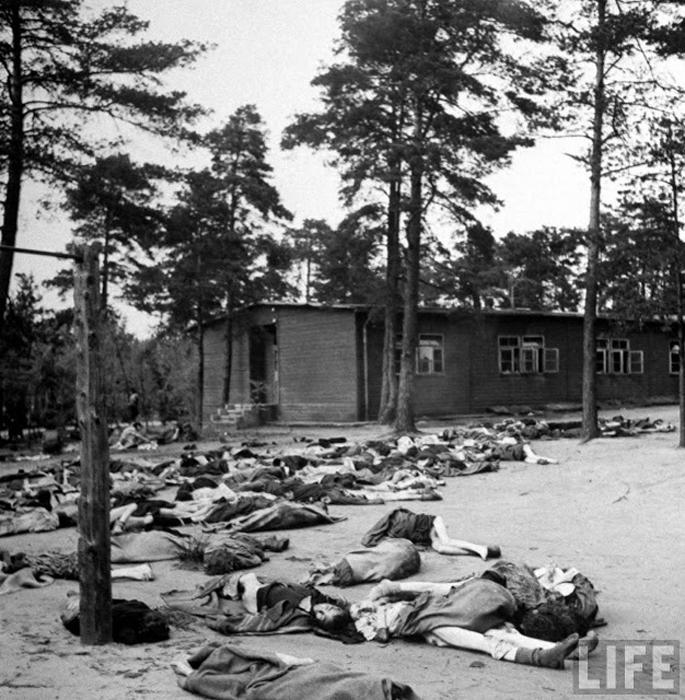 Тела лежат на земле концлагеря Берген-Бельзен.