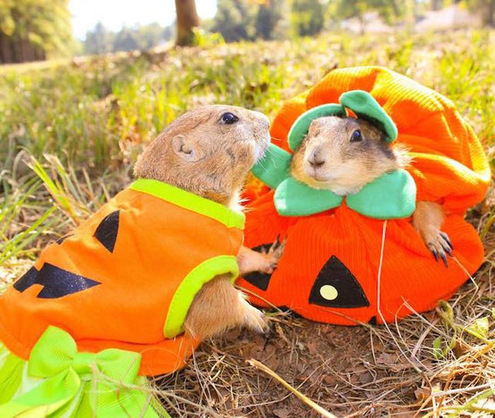 Луговые собачки на Хеллоуин.