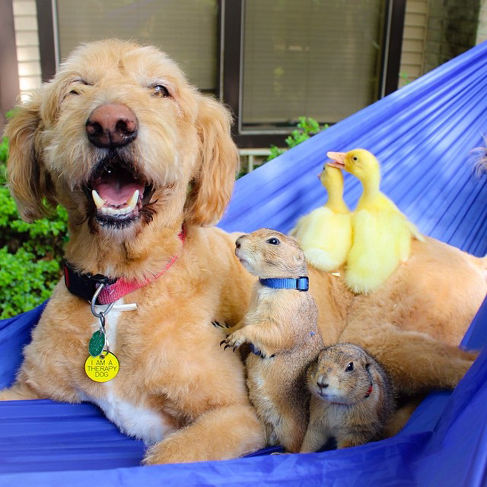 Собака Бисквит, луговые собачки Бинг и Сварли, а также утята Хью и Халперт.