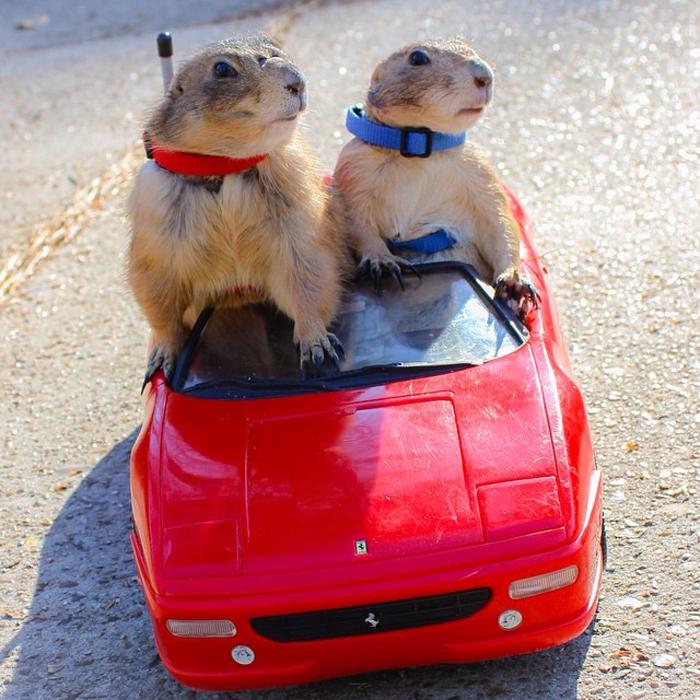 Выезд в город на красном кабриолете.