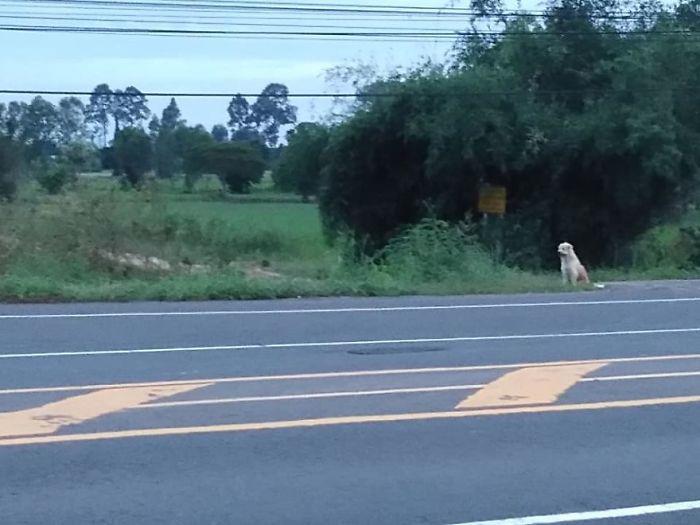 Лео у дороги.