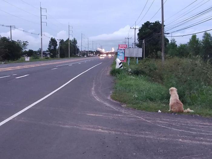 История потерявшейся собаки в Таиланде.