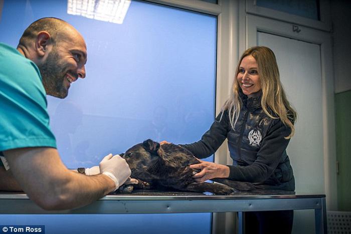 Ветеринары говорят, что к ним доставляют изувеченных собак буквально каждый второй день.