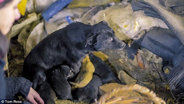 Однако на улицах остаются тысячи собак, которые беззащитны перед сильными морозами и человеческой жестокостью.