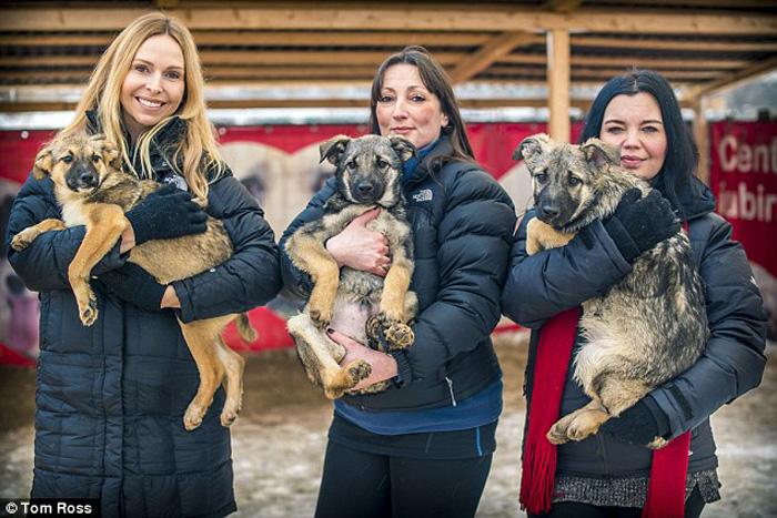 Местные активисты помогают пристроить бездомных животных и заботятся о тех, которые уже находятся в приюте.