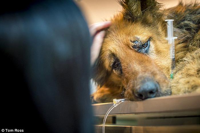Больше всего журналистку шокировал факт, что маньяк изнасиловал собаку с помощью острого ножа.