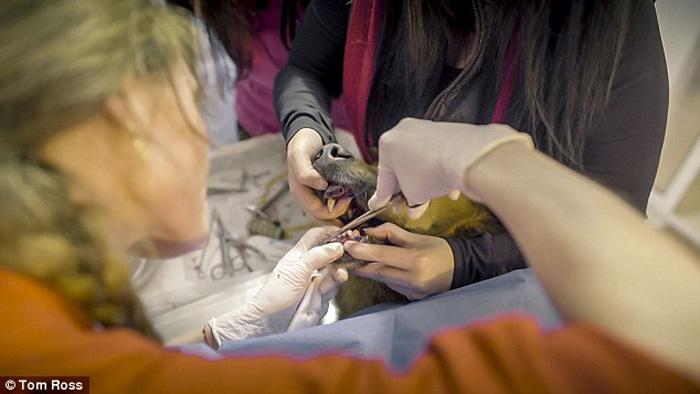 У овчарки были выбиты зубы, поломан хвост и отрезана лапа.