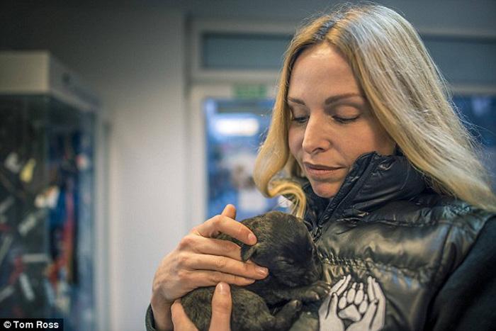 Женщины забрали щенков и их маму с улицы в приют для животных.