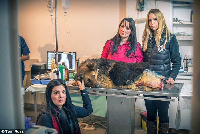 Аннеке Свенска и активисты рядом с овчаркой Спирит.