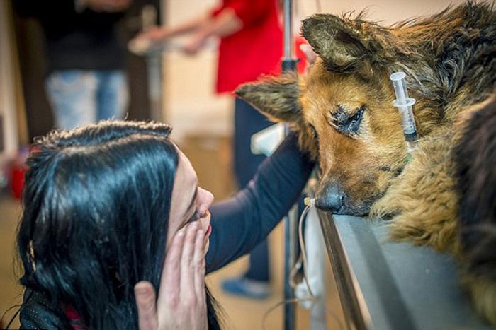 Изувеченную овчарку нашли на улице Бухареста.