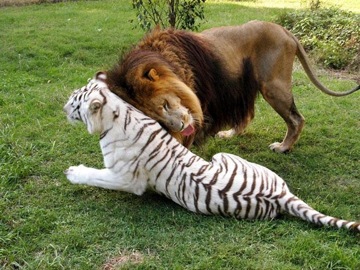 На новом месте решили животных оставить вместе и не расселять.