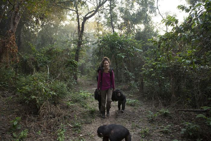 Волонтер из Франции Анисса Аидат ведет нескольких животных на пешую прогулку.  Фото: Dan Kitwood.