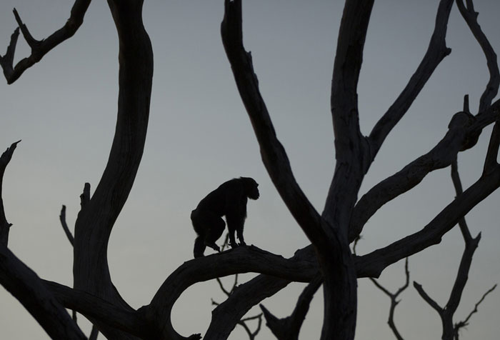 Шелли стоит на дереве на территории центра.  Фото: Dan Kitwood.