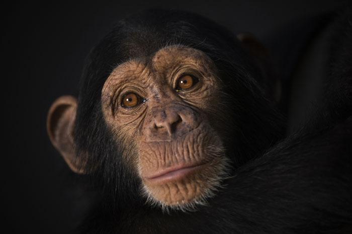 Портрет Мисси, одной из подопечных Центра.  Фото: Dan Kitwood.