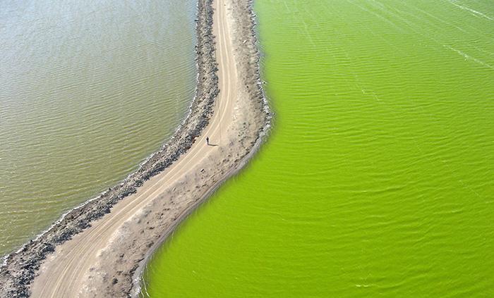 Невероятные цвета соляных прудов залива Сан Франциско.