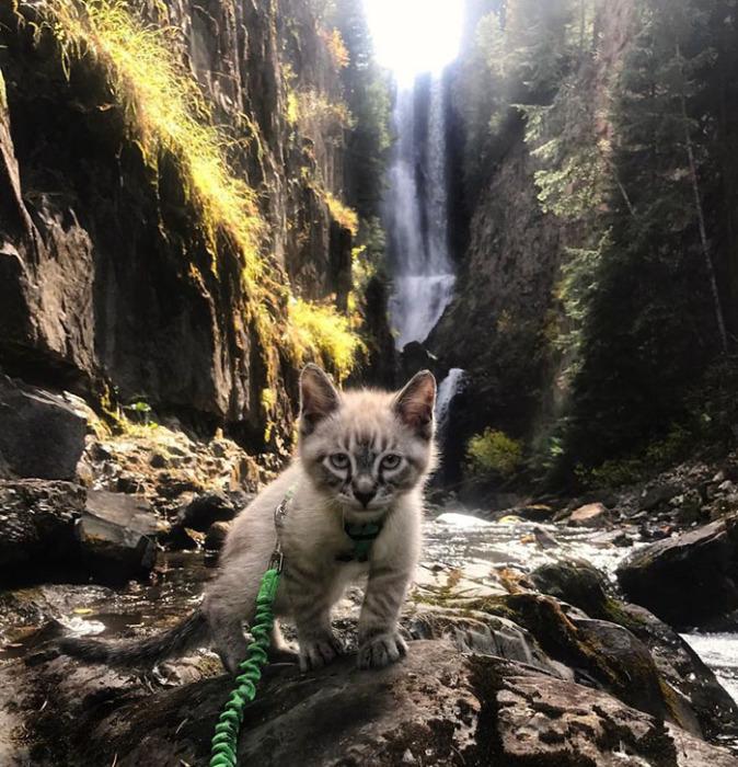 Маленький котенок на большом задании. Instagram henrythecoloradodog.