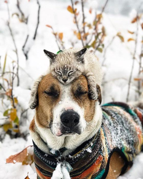 Генри, можешь идти по снегу, а я полежу пока здесь. Instagram henrythecoloradodog.