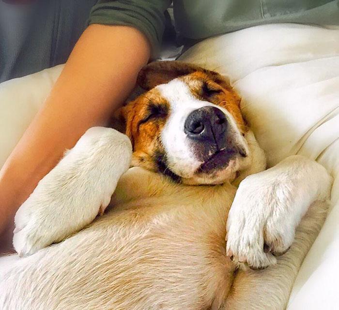 Синтия забрала Генри из приюта для животных в 2014 году.  Instagram henrythecoloradodog.