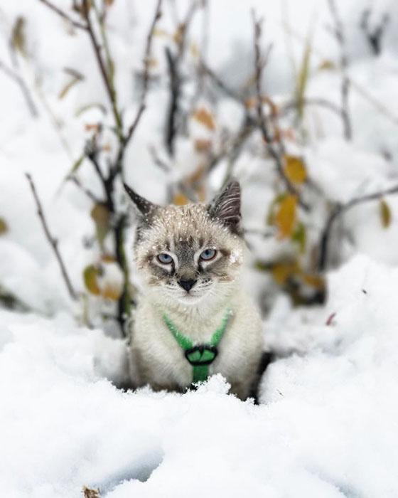 Балу знакомится со снегом.  Instagram henrythecoloradodog.