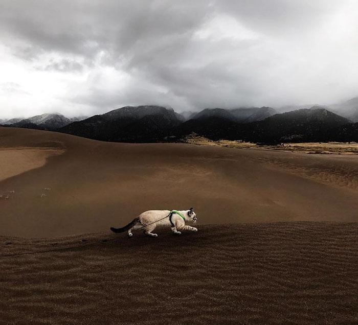 Кошачья походка по незнакомой местности.  Instagram henrythecoloradodog.