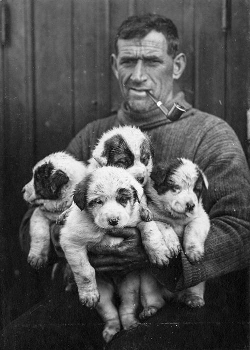 Второй помощник капитана Том Крин со щенками ездовых собак.