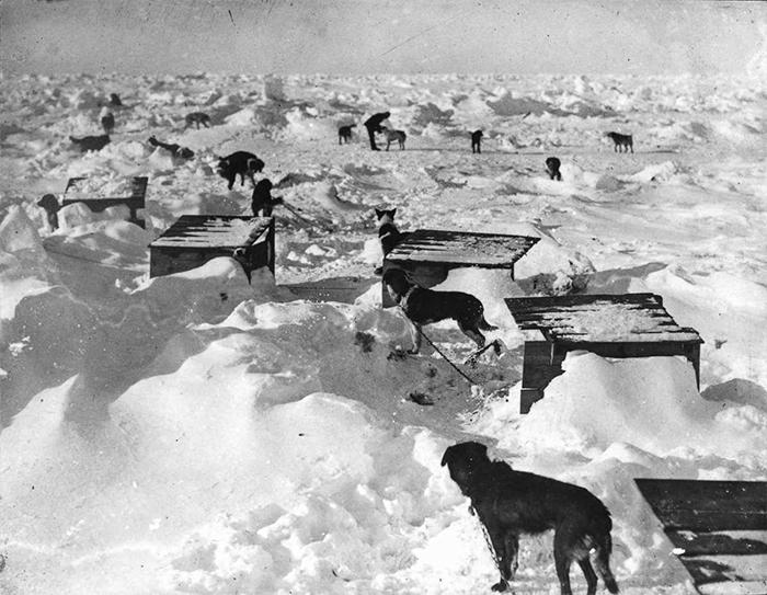 Собаки на льдине.