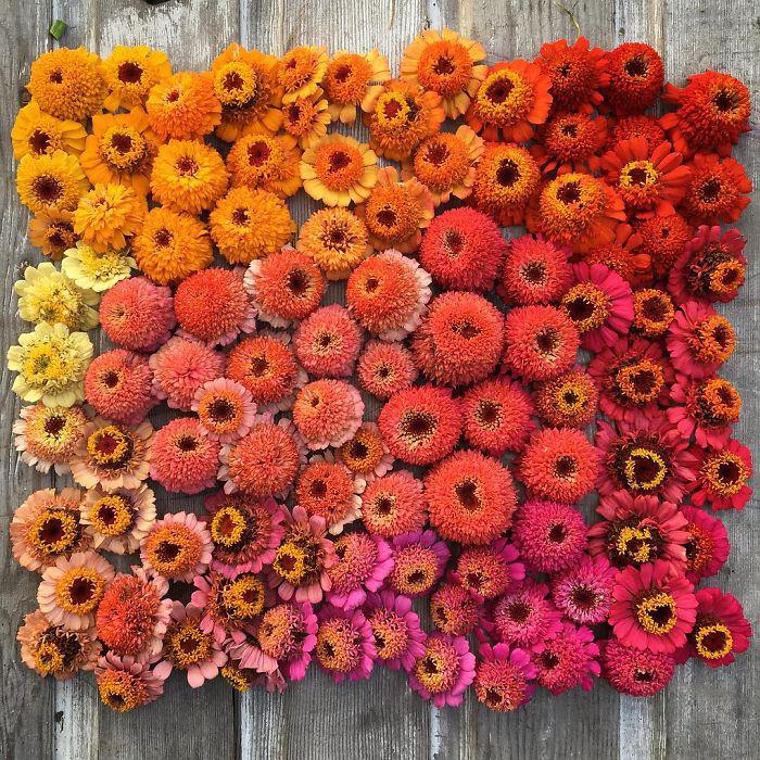 Цветочный градиент в теплых тонах. Instagram floretflower.