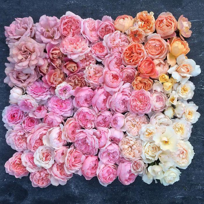 Цветовое разнообразие.  Instagram floretflower.