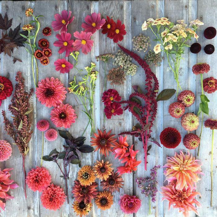 Оттенки красного. Instagram floretflower.