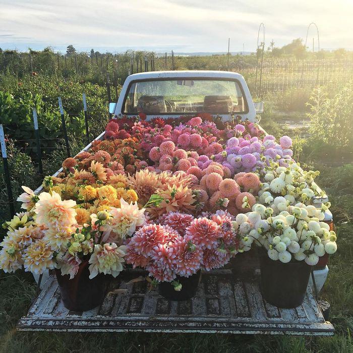 Цветы.  Instagram floretflower.