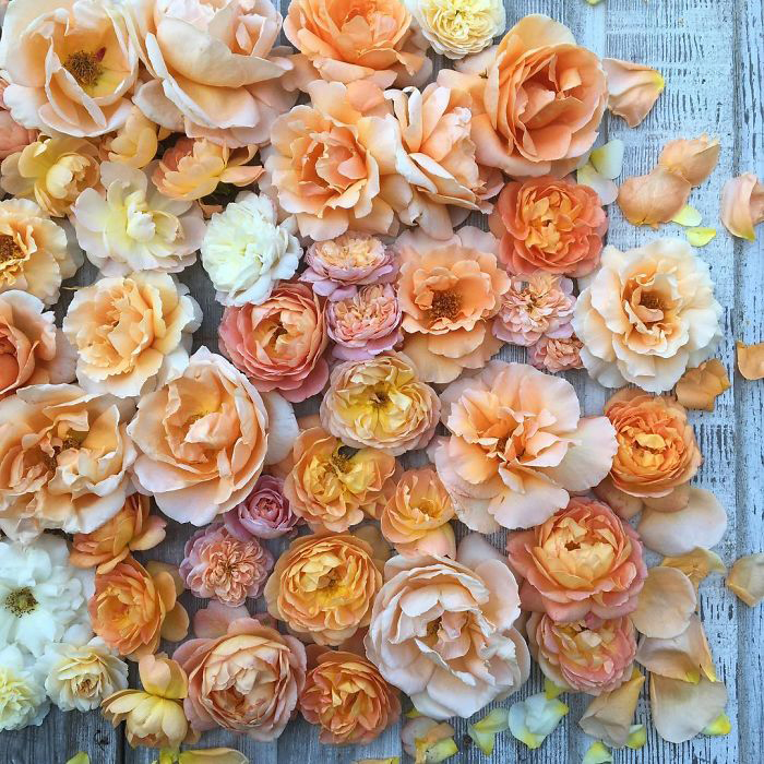 Оранжевые вариации.  Instagram floretflower.
