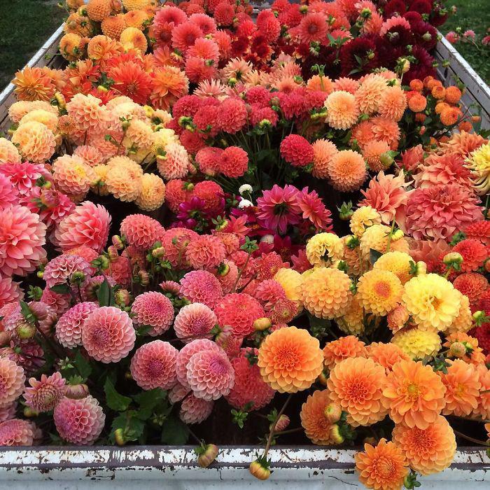 Праздничный грузовичок.  Instagram floretflower.