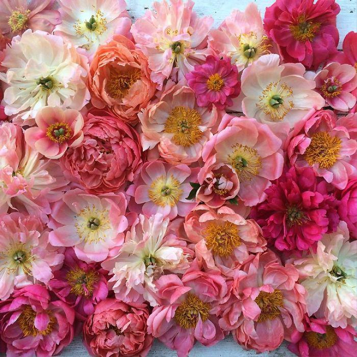Оттенки розового.  Instagram floretflower.
