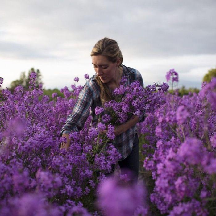 Поле цветов.  Instagram floretflower.