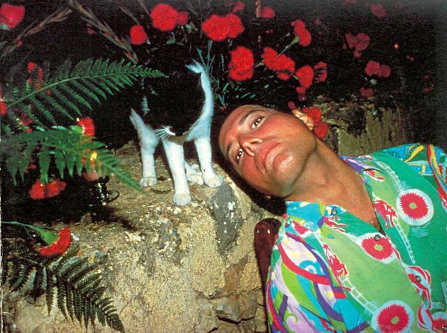 Фредди очень любил своих кошек, настолько, что во время своих турне он иногда звонил по телефону, чтобы те могли услышать его голос.