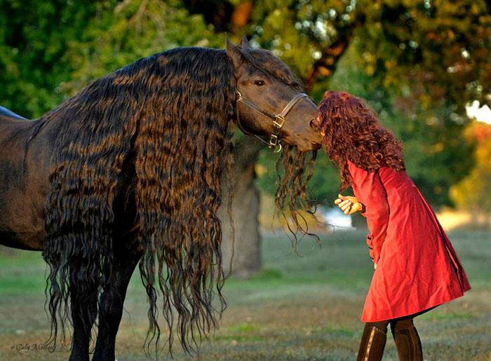 Фридрих Великий - самая красивая лошадь в мире.