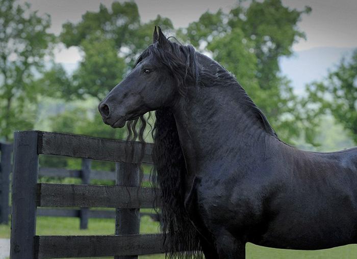 Самая красивая лошадь в мире.