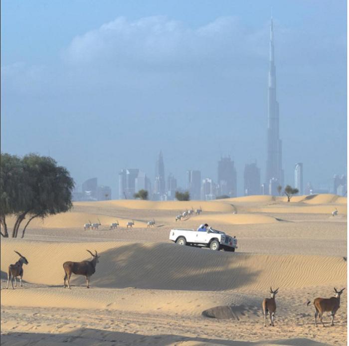Жизнь в Дубаи.  Instagram faz3.