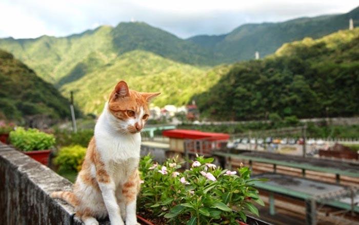 Деревня с котиками.